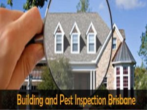 pest inspection brisbane