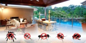 Restaurants pest control Brisbane
